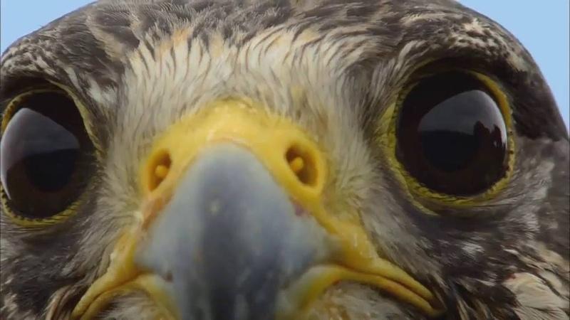 Spirit Bird - Xavier Rudd - with video clips from Earthflight series