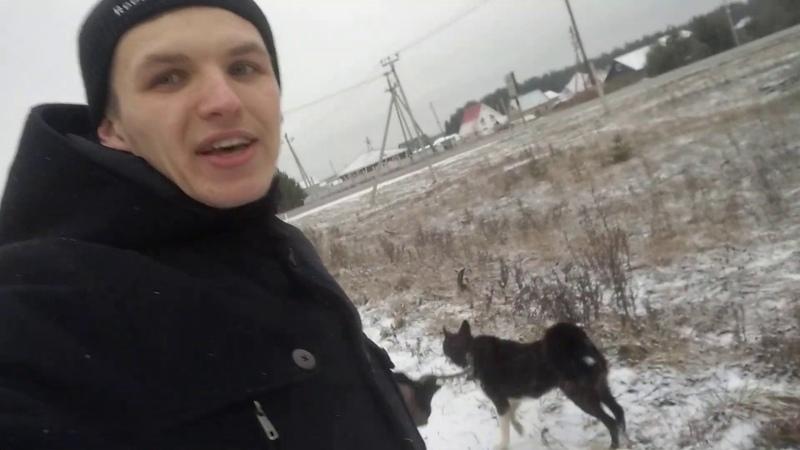 Дрессировка собак отзыв об Akita Dog School в Заинске