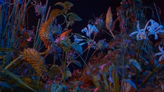 Floating Points - Last Bloom (Official Video)