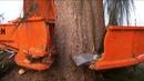 Scary tree cutting machine New machines that shock the lumberjacks