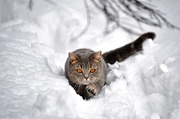 Коты Зимой Обои На Рабочий Стол