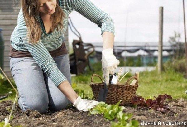 Как вырастить урожай, не потратив ни копейки: 10 разумных советов. 1. Контейнеры для рассадыПосадив рассаду в пластиковые бутылки, ты убъешь сразу 2 зайцев: сэкономишь на контейнерах и