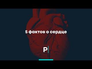 5 фактов о сердце