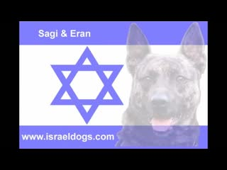 4 israeli special forces dogs simultaneous attack the bad guy.mp4