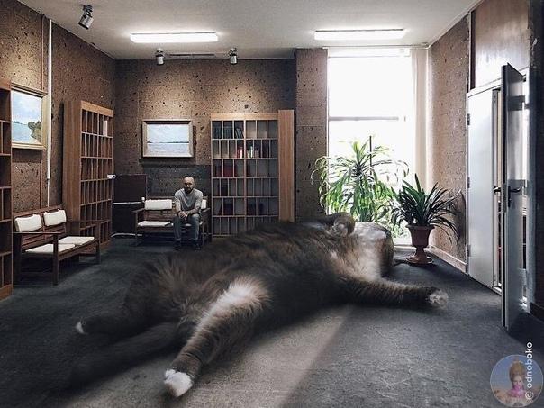 Как бы выглядил мир, если бы коты были чуточку большe