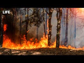 Уголовное дело возбудили из-за лесных пожаров в Сибири