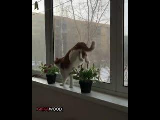 GIFKAWOOD   Январь 2020 лучшие видео приколы смешные свежие новинки самые топ смотреть интересные веселые животные котики