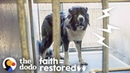 Aggressive Dog Learns How To Trust People The Dodo Faith = Restored