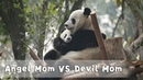 Happy Mother's Day To All Panda Moms! | iPanda