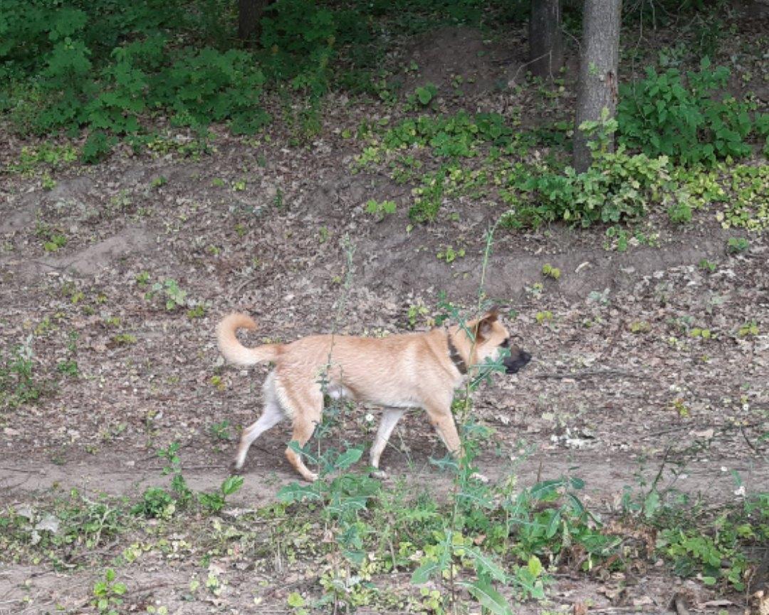 Пропала собака, сообщите пожалуйста если ктото видел.