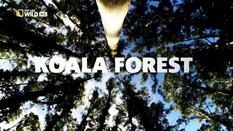 4.-Bosque de los Koalas