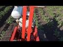 Покрасил трактор Окучиваю картофель