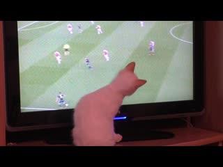 119. Котёнок смотрит футбол по телевизору