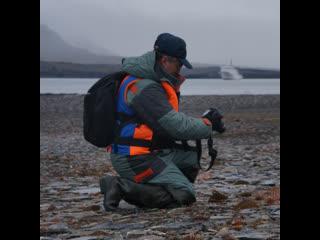 Ученые сделали открытие в Арктике
