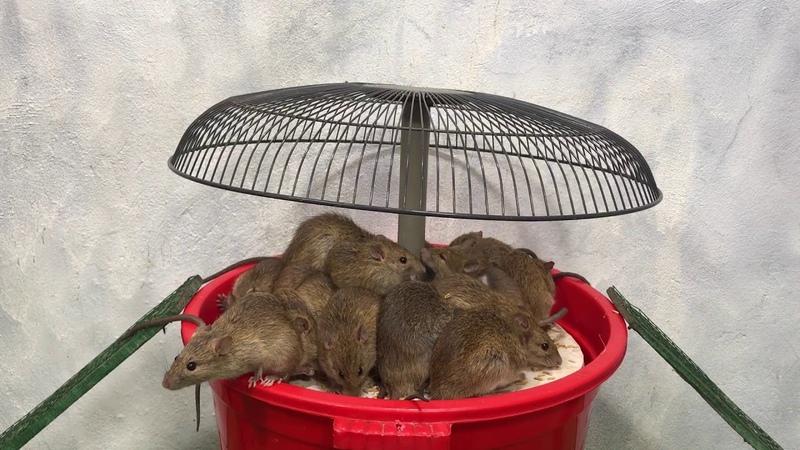 Membuat perangkap tikus mudah | Mouse Trap / Rat Trap | Top 10 elektrische Mausefalle 13