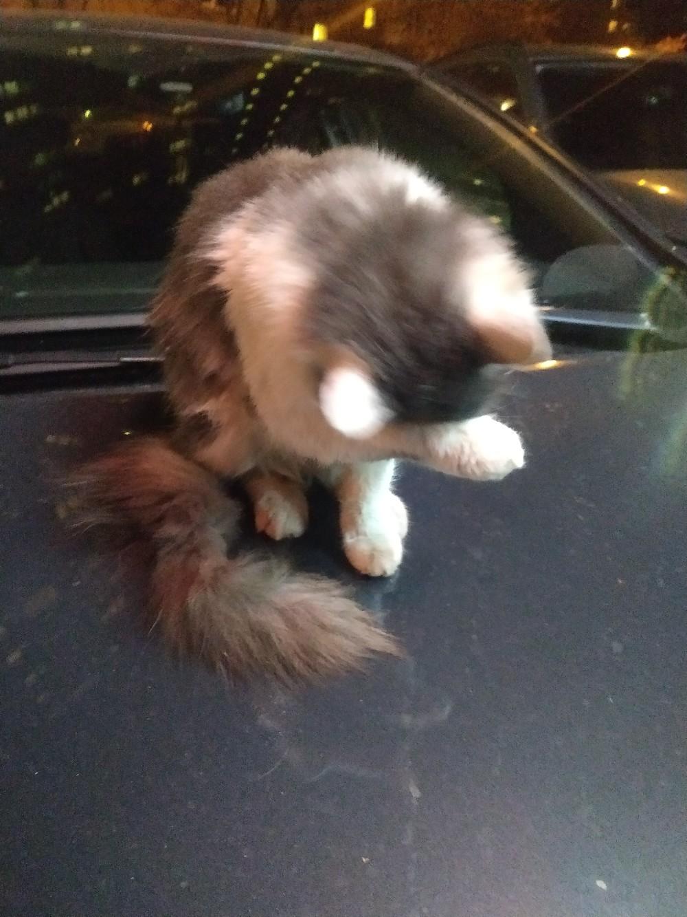 Кто потерял котика? Серо-белый окрас, с фиолетовым