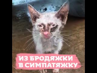 Перевоплощение котика из бродяги в симпотягу