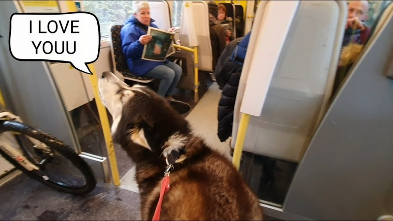 Dog Embarrasses owner daily by Talking to strangers The Cafe part was Hilarious