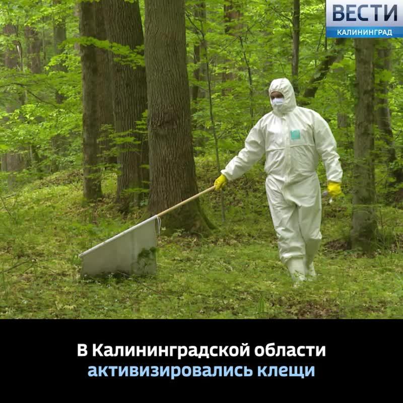 В Калининградской области  активизировались клещи