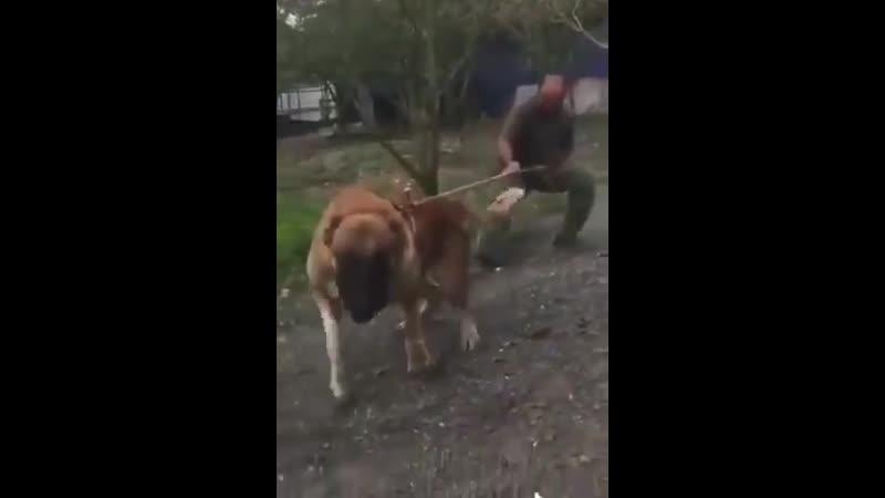 Этому псу никогда не отказывают когда он хочет погулять