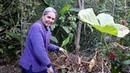 02 Jardim de Ervas Medicinais com Sandra Regina