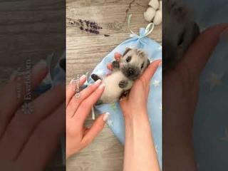 Коллекционная войлочная игрушка Ёж/Сухое валяние/Войлочный ёж/Игрушка из шерсти/Авторская игрушка