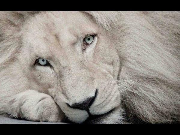 Самые красивые животные планеты Видео о животных The most beautiful animals of the planet