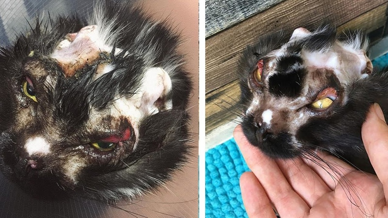 Rescued Poor Cat Was Burned All Over The Body By The Wicked Man Doused Boiling Water