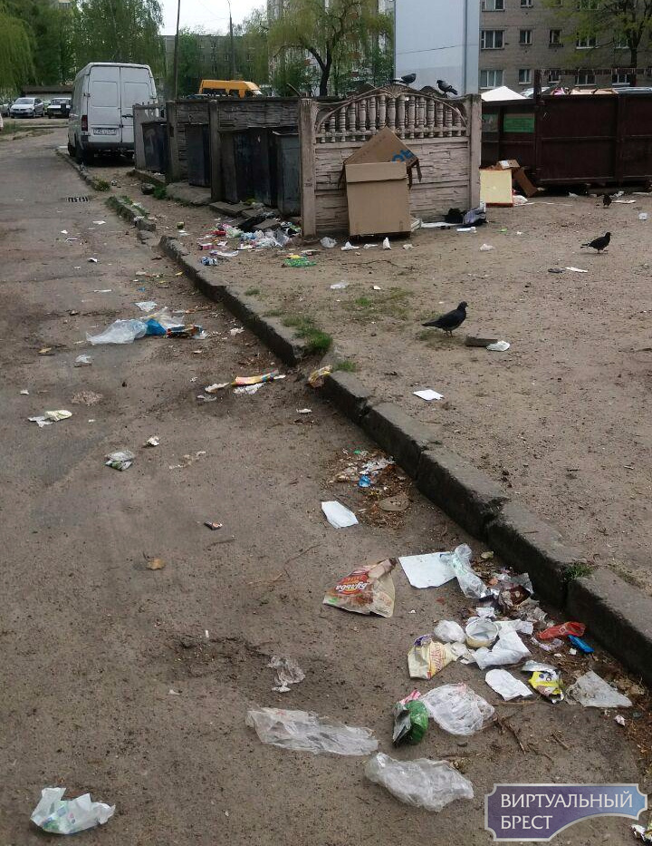 В отсутствии дворников брестчане не справляются с уборкой мусора. Даже не пытаются