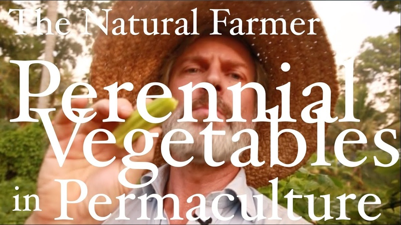 23 Perennial Vegetables in Permaculture - Tropics - John Kaisner The Natural Farmer