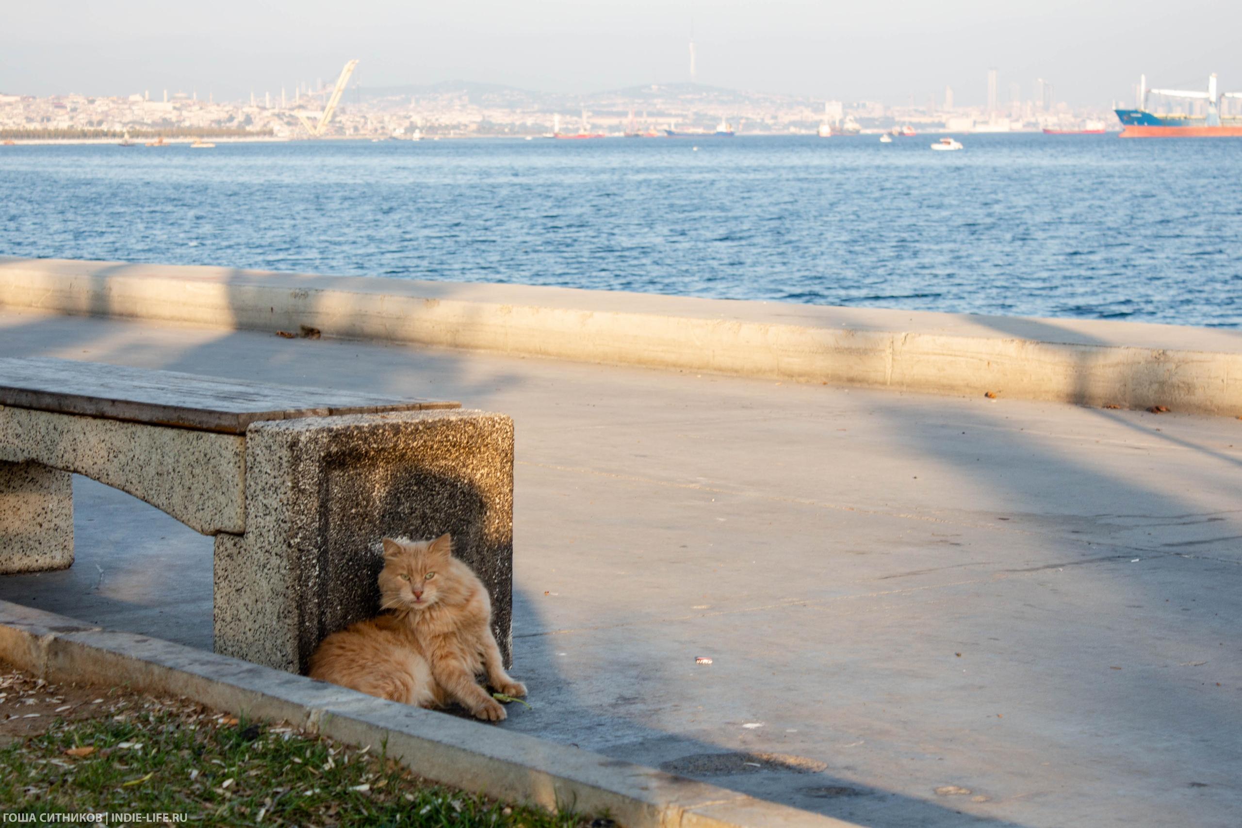 Кот и скамейка