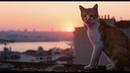 Город кошек (Документальный / США, Турция/ 6/ в кино с 30 ноября 2017)