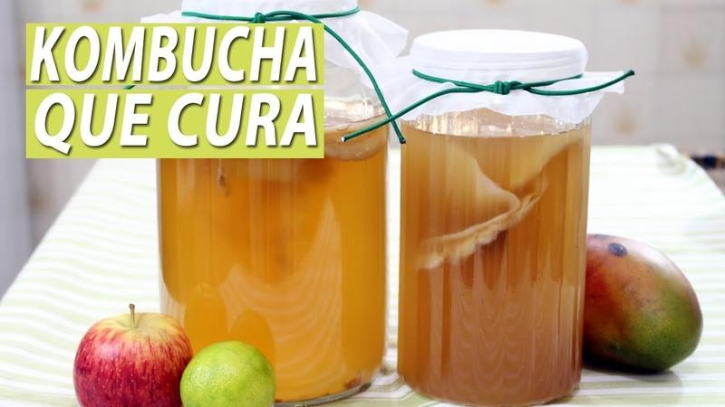 KOMBUCHA probiótico que cura | PRIMEIRA FERMENTAÇÃO com chá verde | Parte 1