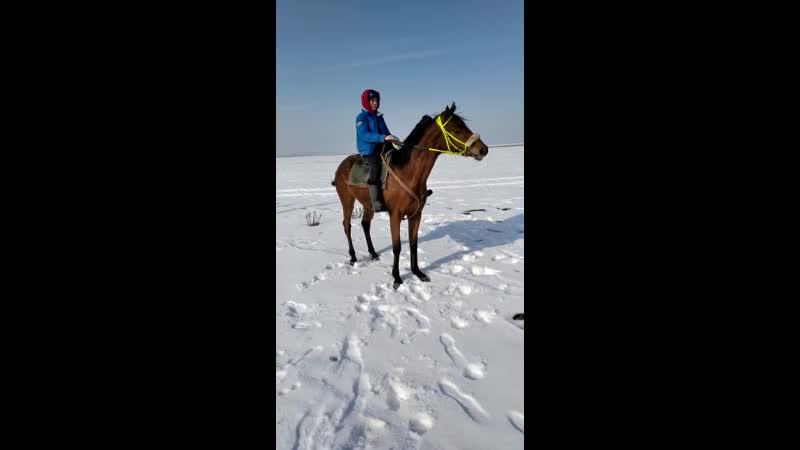Нурлан Шарипов Дөнен 2020ж