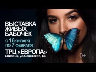 Выставка живых бабочек в Липецке
