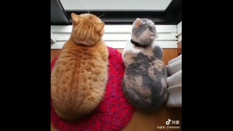 Что то крайне притягательное хорошее настроение милое домашнее видео котики кошки кисы трио дом кошка киса кот .