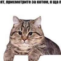 Дима Васькин