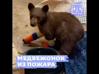 Спасли медвежонка во время пожара в Калифорнии