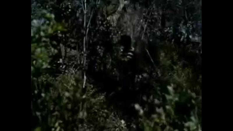 Видео от Айнди Исаева