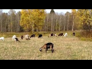 Осенний пейзаж.ЛПХ Юрия и Светланы Сенецких.Московская область.