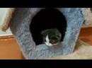котята ищут дом.