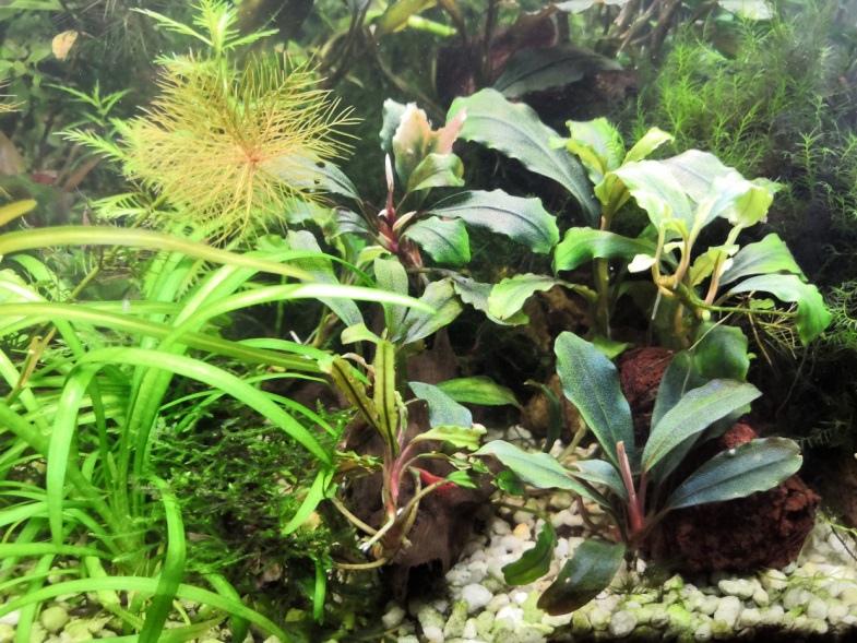 1 Юлия Черкас - Обзор светильника AQUAEL LEDDY SMART 2 PLANT, изображение №4