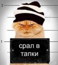 Фотоальбом Артура Шапошникова