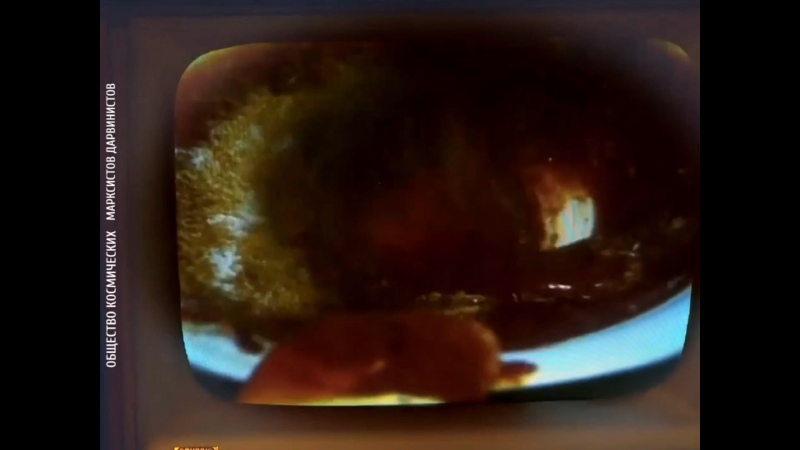 Афромосквич Антоха в Берлине проводит органолептичнскую экспертизу германских сосисок