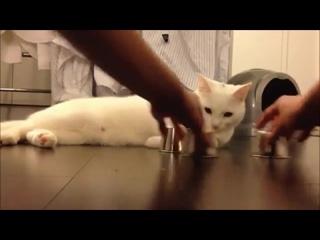 Кручу-верчу, кота запутать хочу! (6 sec)