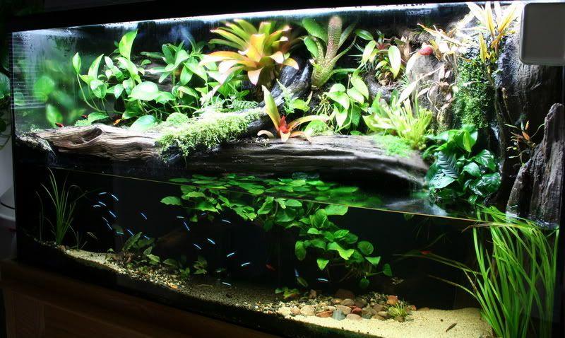 Пример палюдариума с рыбками