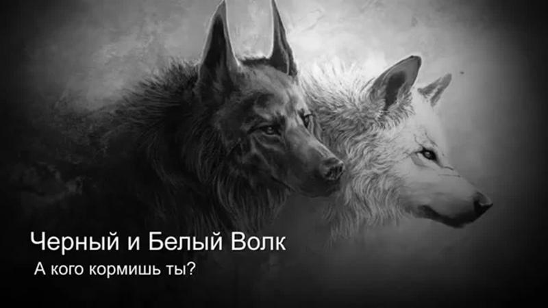 Песня про двух волков чёрного и белого