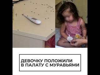 Девочку положили в палату с муравьями