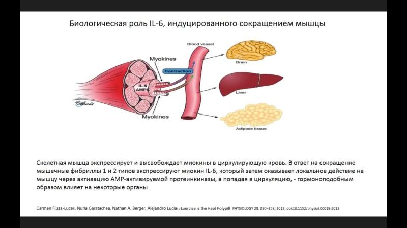Влияние гиподинамии в условиях самоизоляции на течение остеоартрита Алексеева Л И