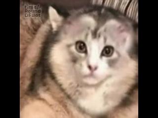 Очень странный кот из Польши объелся аделлы, сбежав из Харамеля